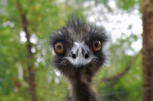 emu funny photo