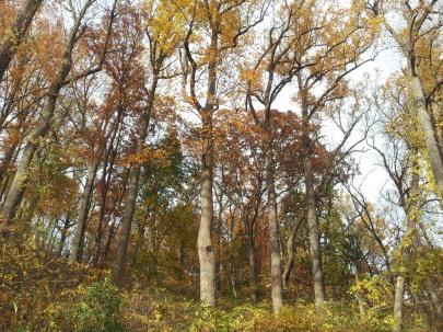 gorgeous Fall meditation